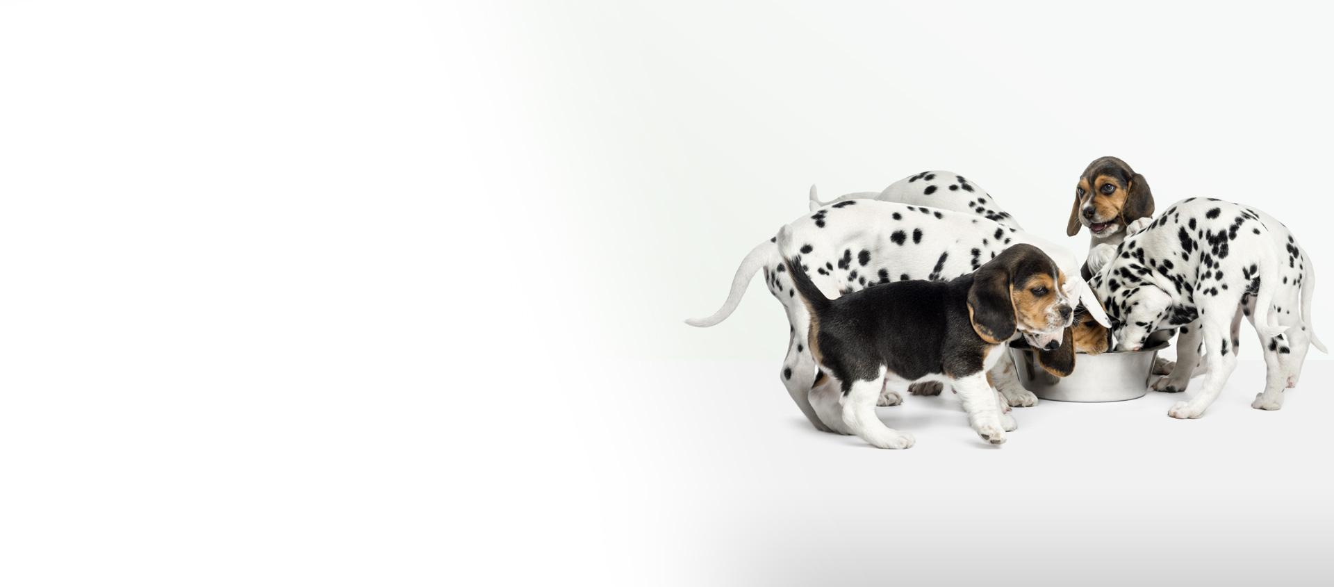 Fratelli Ramella Cibo Per Cani E Gatti Prodotti Per Piante